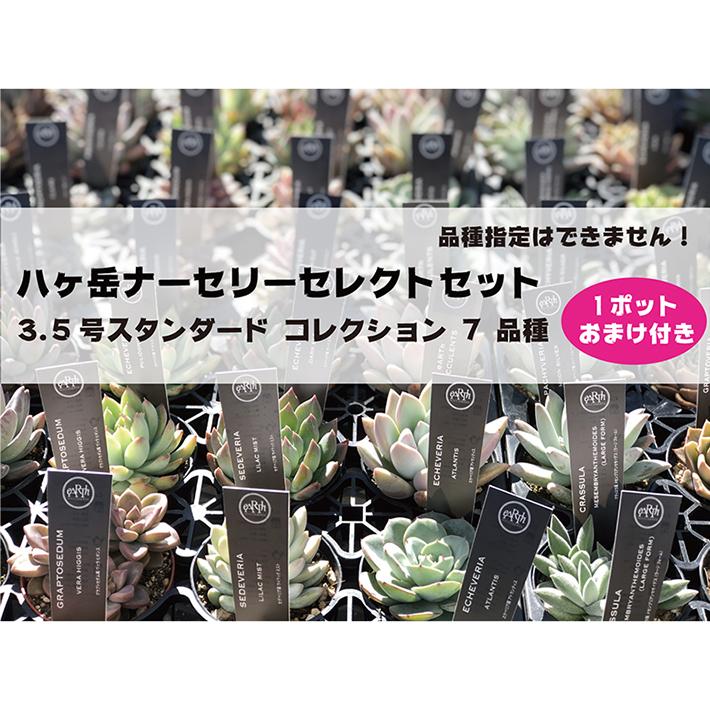 八ヶ岳ナーセリーセレクトセット 3.5号スタンダード コレクション 7 品種
