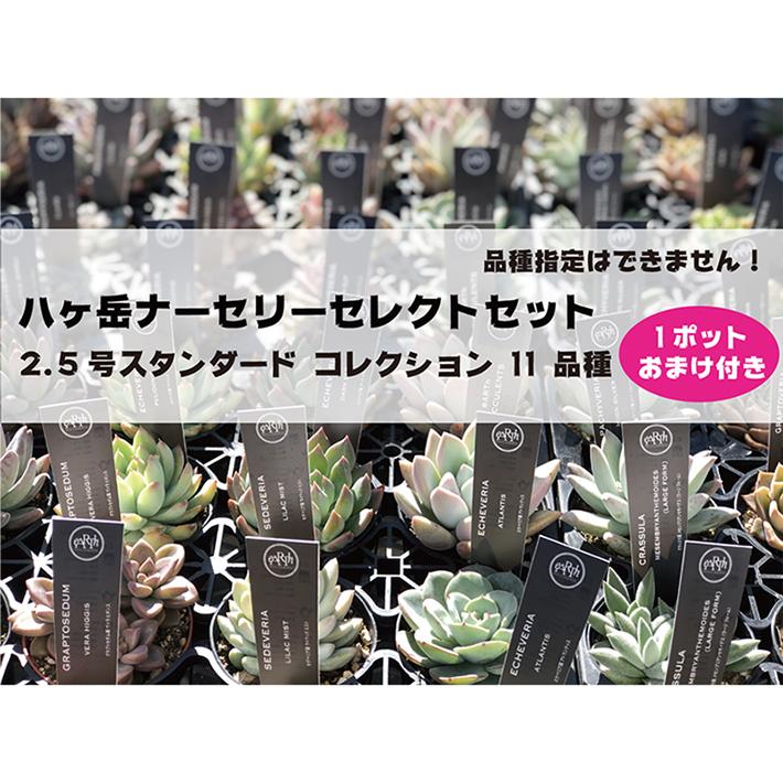 八ヶ岳ナーセリーセレクトセット 2.5号スタンダード コレクション 11 品種