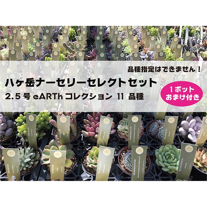 八ヶ岳ナーセリーセレクトセット 2.5号 eARTh コレクション 11 品種