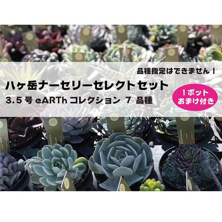 八ヶ岳ナーセリーセレクトセット 3.5号 eARTh コレクション 7 品種