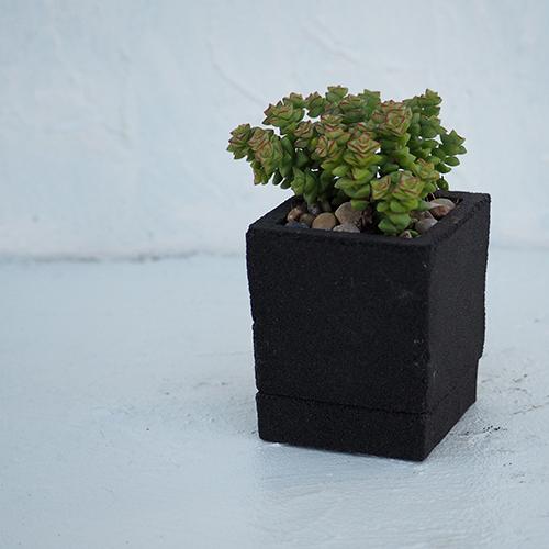 SP - 06 - bk - 多肉植物
